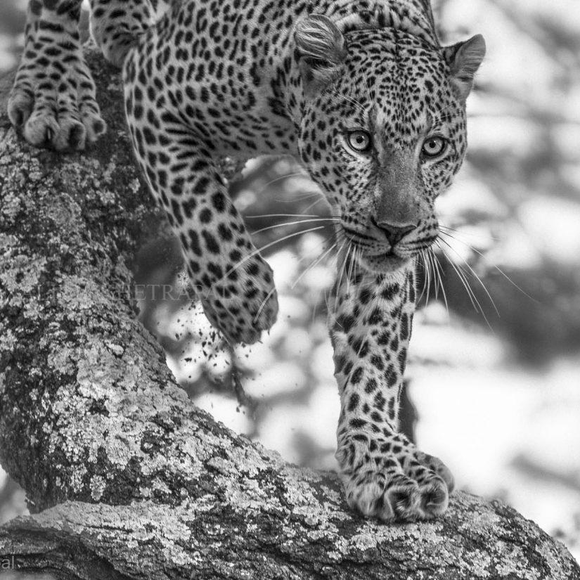 Ndutu Plains, Southern Serengeti (Tanzania)