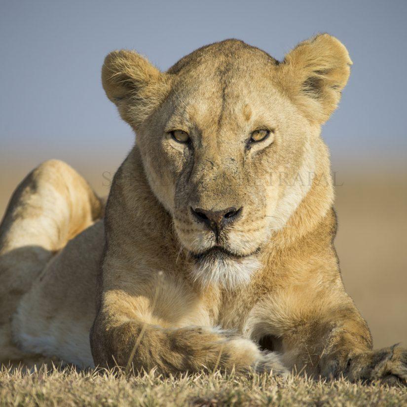 Eastern Serengeti (Tanzania)